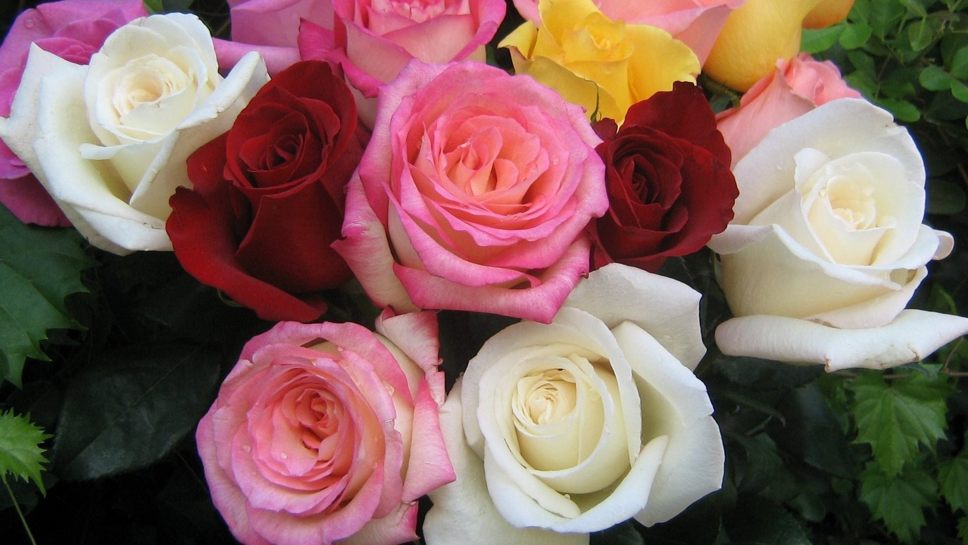 10 roses flowers - Feenix- Food & Cake Delivery Service in Trichy